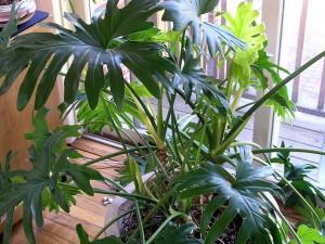 House Plants - Homelement Furniture Design