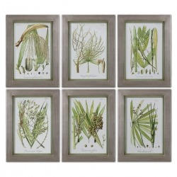 Uttermost Palm Seeds Framed Prints - Set of 6